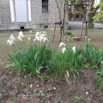 宇都宮大学 フランス庭園